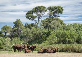 F_Sigean_Safaripark_Langhorn...?©Hilke Maunder.