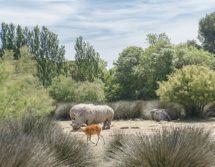 F_Sigean_Safaripark_Rhino©Hilke Maunder.