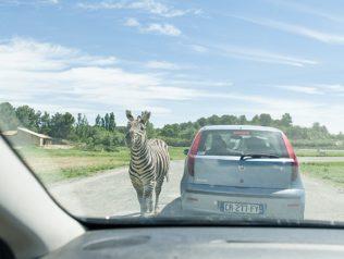 F_Sigean_Safaripark_Zebra©Hilke Maunder.