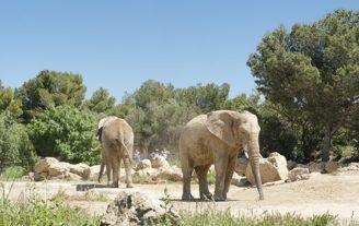 F_Sigean_afrik. Elefant_© Hilke Maunder