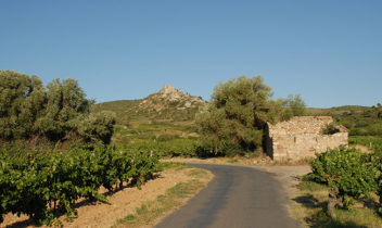 F/Languedoc-Roussillon/Corbières/Tuchan: Château d'Aguilar