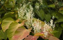 f_viarho%cc%82na_natur_herbst_2_hilke-maunder